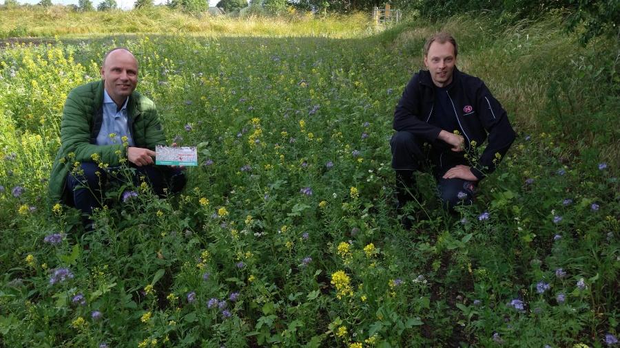Blühwiese und landwirtschaftlicher Betrieb in der Nähe von Kropp